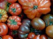 tomates Pommes d'amour