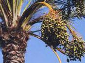 Fini l'huile palme