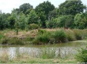 Jardin Brocéliande Bretagne