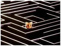 labyrinthe.jpg
