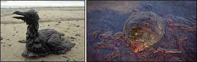 Une marée noire peut en cacher une autre