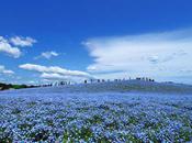 Parc national Hitachi Japon photos)