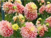 Fleurs wek-end Thabor Rennes