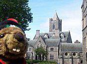 Marmotte Dublin