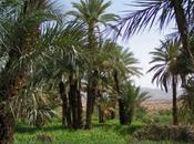 Voyages Maroc (partie