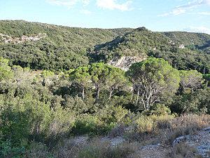 Garrigue couverte