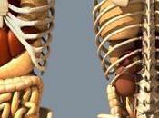 jeûne accompagné d'un Tsang (massages ventre, organes)