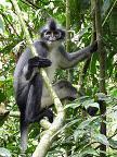 Un adorable punkie macaque