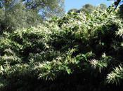 Conférence plantes invasives Lorraine