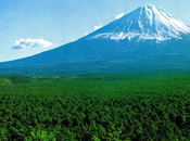 Aokigahara(青木ヶ原), lieu plus hanté Japon
