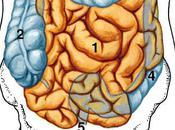 L'Intestin intelligent Herbolistique