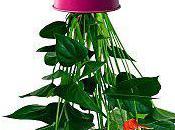 plantes renversantes...