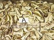 Supply porcini, shiitake champignons CHUN FOODSTUFFS SHENZHEN CO.,LTD