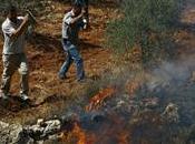 Rapport: terre brûlée, nouvelle politique sioniste contre Palestiniens