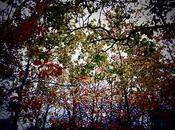 Sunday Autumn Sunday…