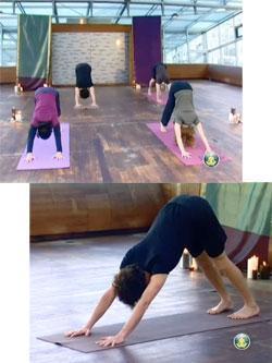 Le yoga en ligne
