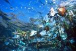 continent d'ordures dans Pacifique Nord