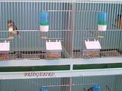 l'espace vital pour oiseaux.