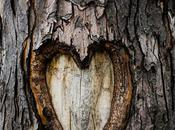 arbres aussi versent larmes (Alain Mabanckou)