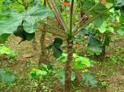 huiles végétales dans biodiésel brésilien, déjà demain