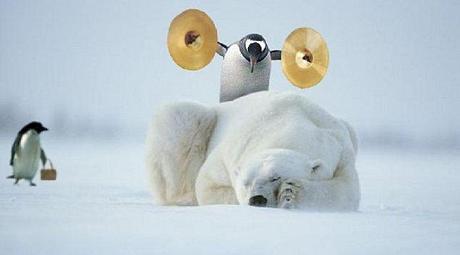 pingouin-ours-.jpg