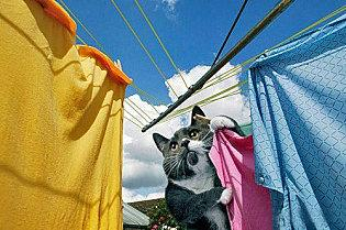 chat linge diligent housewife
