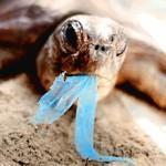 Le voyage fantastique du sac plastique