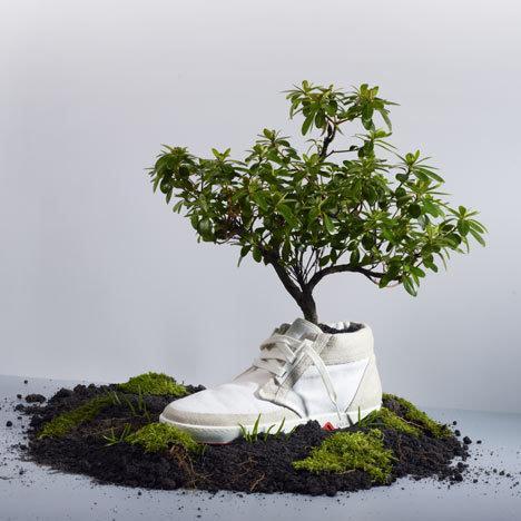 la chaussure biodégradable qui se transforme en arbre - À lire