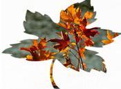 Deux feuilles d'automne (Abbas Kiarostami)