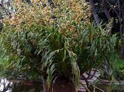 Deux orchidées exceptionnelles