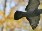 Tchernobyl oiseaux seraient dotés petits cerveaux.