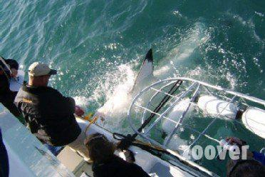 Ne laissez pas un requin gâcher vos vacances!