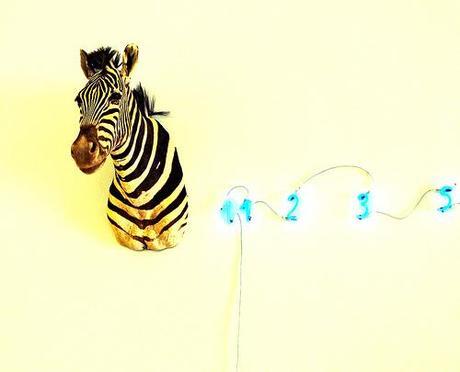 Zebra merz
