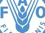 microcrédit rôle femmes dans l'agriculture