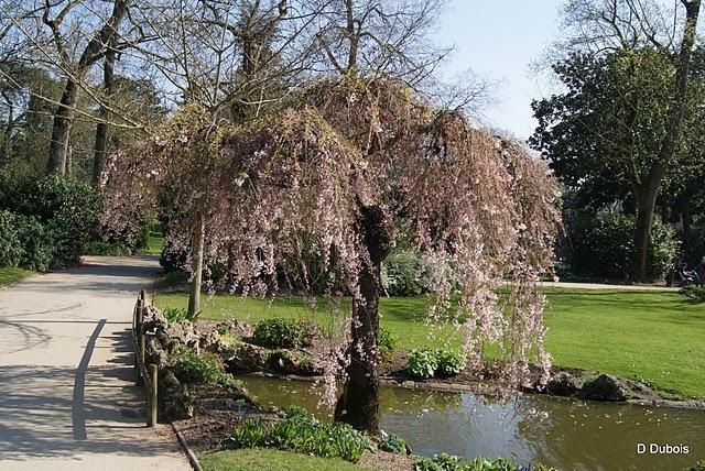 Le Jardin des Plantes de Nantes. - Paperblog