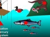 MERCURE: Manger poisson, source risque cardiovasculaire England Journal Medicine