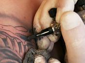 Douleur tatouage