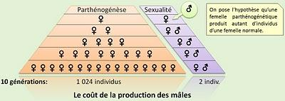 Parthénogenèse - vs - Reproduction sexuée.