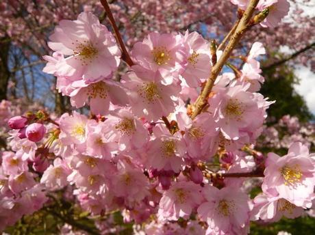 Fête des plantes : pas de poisson d'avril pour Saint Jean qui commence le 1 er avril