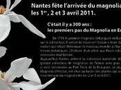 tricentenaire magnolia France