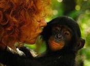 Bonobos [Les Résultats]