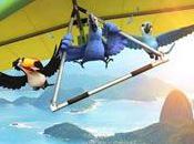 perroquet survole office
