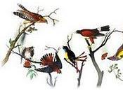Doodle Audubon