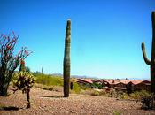 Fini l'Arizona, retour pays yoga pants