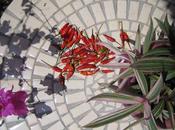 Assurez succès pour votre table jardin mosaïque, forgé barbecue charbon
