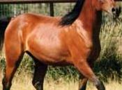 Blog cheval Passion Equitation Quizz galop