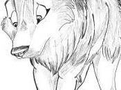 **Dessin loup feutre**
