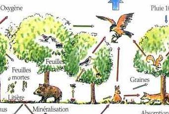 Exemples d'écosystèmes : Forêt et milieu lentique | À Voir