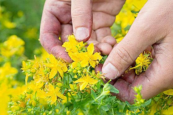 hand-picking-flower-copie-1.jpg