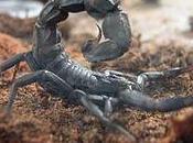 serpents, souris scorpions.